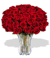 48 Premium Rose (Long Stem)