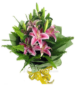 3 Pink Lilium with rich green foliages