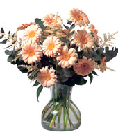 16 Pink Gerbera Daisies With a Vase