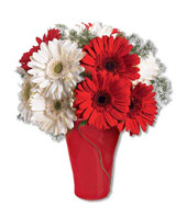 5 Red Gerbera Daisies and 5 White Gerbera Daisies With a Vase