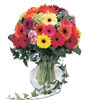 36 Mixed Gerbera With a Vase
