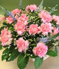 16 Pink Carnations