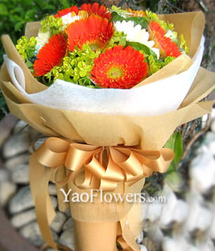 10 Gerbera Daisies with double color