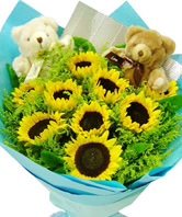 9 Sunflowers,a pair of Teddy bear