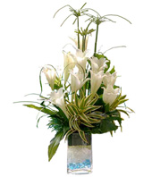 White Lilies With Song Of India In Clear Glass Filled With Blue Pebbles