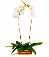 Table Arrangement Of White Orchids