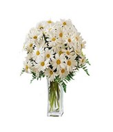 36 blooms of plump white daisies and fresh greens