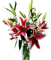 Stargazer lilies and greens for a vase arrangement