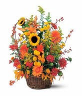 basket arrangement of chrysanthemums, gerberas, lilies, sunflowers with seasonal greens and fillers