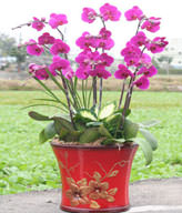 Red Orchids,Congratulation. Birthday,The New Opening,Moving,Advance In Office, Being Promoted. Wedding Ceremony