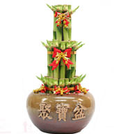 FENGSHUI PLANTS,GONG XI FA CAI PLANTS,Wealth opened games bamboo