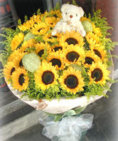 33 Sunflowers,A bear