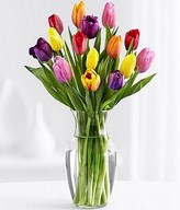 15 Multi-Colored Tulips