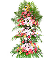 GongxiFaCai-3-Tier Openning Basket- Lily , Daise, bird of paradise , anthurium, carnation , green leafy