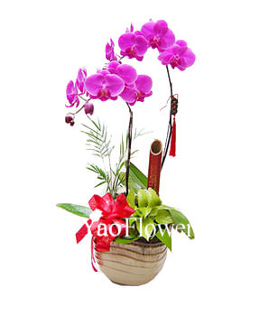 Two Red Orchids,For indoor office or desktop display , the opening ceremonies, housewarming, holiday , birthday gifts
