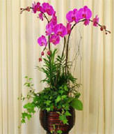 Three Red Orchids