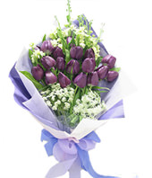 20 purple tulip