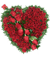 66 red roses,heart-shaped