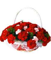 50 Red carnations