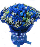 66 blue roses with baby's breath