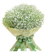 baby's breath packed in perfectly round