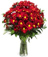 Red Elegance: red chrysanthemums