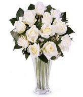 Pure and Innocent Love: 12 white roses