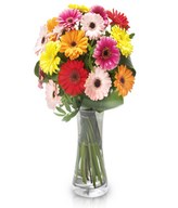 Irreplaceable: multicolored gerberas