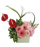 Arrangement of red anthurium, pink roses and gerbera, combine with white lilies and greenies in vase