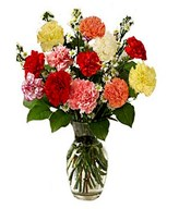 12 Assorted Carnations