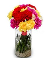 20 Assorted Carnations