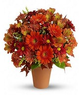 Mix Gerberas In A Basket