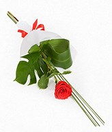 1 Long stem red rose