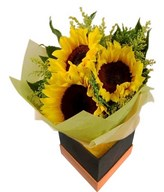 Bouquet of 3 sunflowers