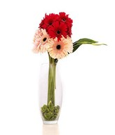 Mixed Gerberas in a Glass Vase