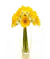 Yellow Gerbera and Filler  in a Glass Vase
