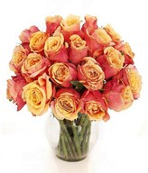 20 stem of Two Tone Roses in a Vase