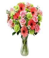 Dozen of pink roses, gerberra, daisies, green carnations, and more in Bouquet