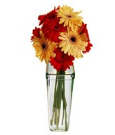 Mixed Red and Yellow Gerberas in Vase