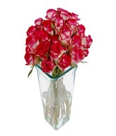 24 Two Tone Roses in Vase