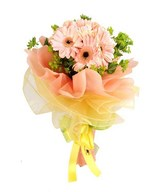 12 Soft Pink Gerberas in a bouquet