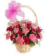 12 Pink Carnations with Fillers in a Basket