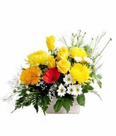 Arrangement of Yellow rose and Chrysanthemum with yellow and Orange Gerbera and fillers in White Ceramic Vase