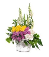 Arrangement ofmixed roses consist with purple, yellow and white with white snap dragon in vase