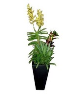Live yellow orchids in pot with fresh soil