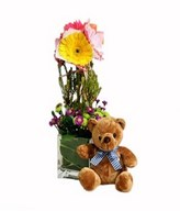 Mixed Color Gerbera in Glass Vase & Brown Care Bear