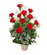 11 Red Carnations in Vase