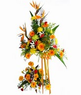 Perfect combination of Birds-of-Paradise, Daisy, Anthurium, Carnation and Chrysanthemum