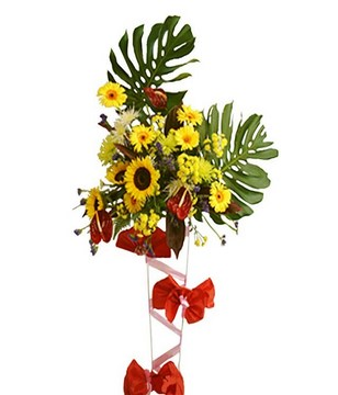 Sweet Anthurium, Daisies, Chrysanthemum and Monster-Leaves