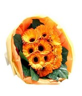 Bouquet of Orange Daisies or Gerberas